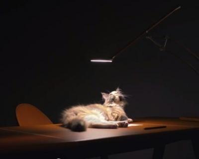 В новой кампании Herm?s Lightning снялись кошки-430x480