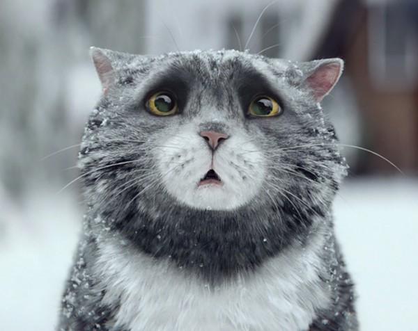 Рождественский ролик про кота-растяпу взорвал интернет-320x180