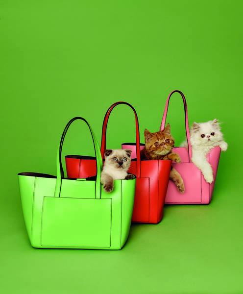Собирают лайки: котики в рекламной кампании Coccinelle-320x180