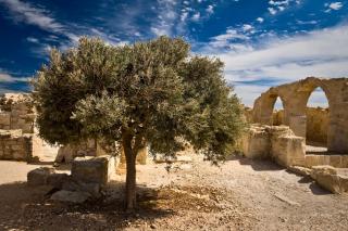 7 причин, почему стоит поехать на Кипр