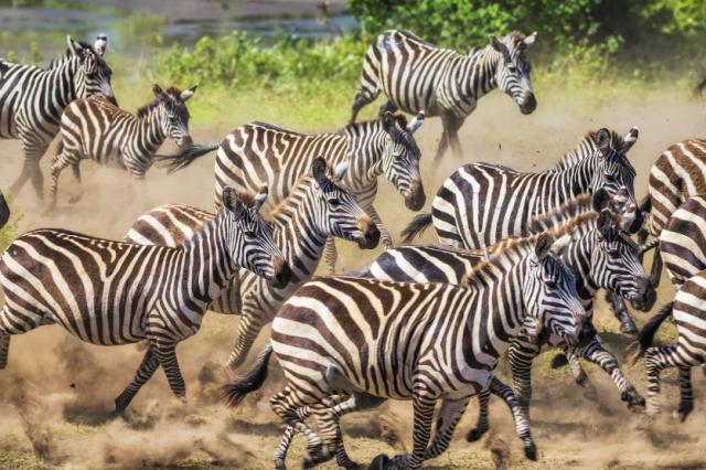 Отдых в Африке - куда поехать - Мари Клер