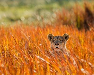 Заметки путешественника: пять мест, которые стоит посетить в Африке-430x480