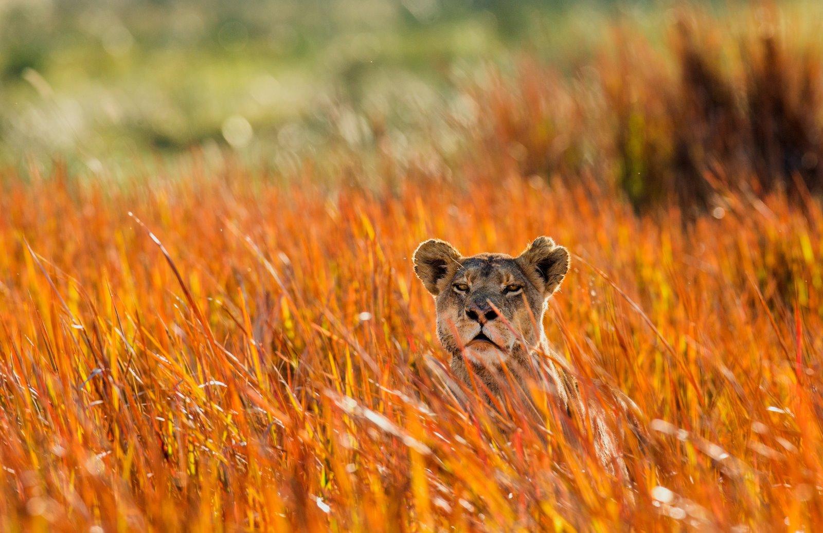 Заметки путешественника: пять мест, которые стоит посетить в Африке-320x180