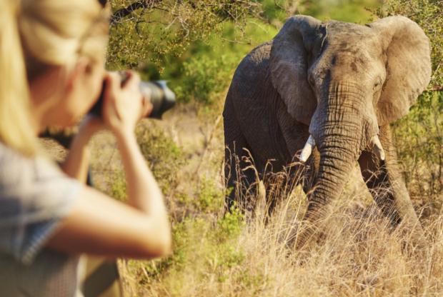 животные Африки - фото, Marie Claire