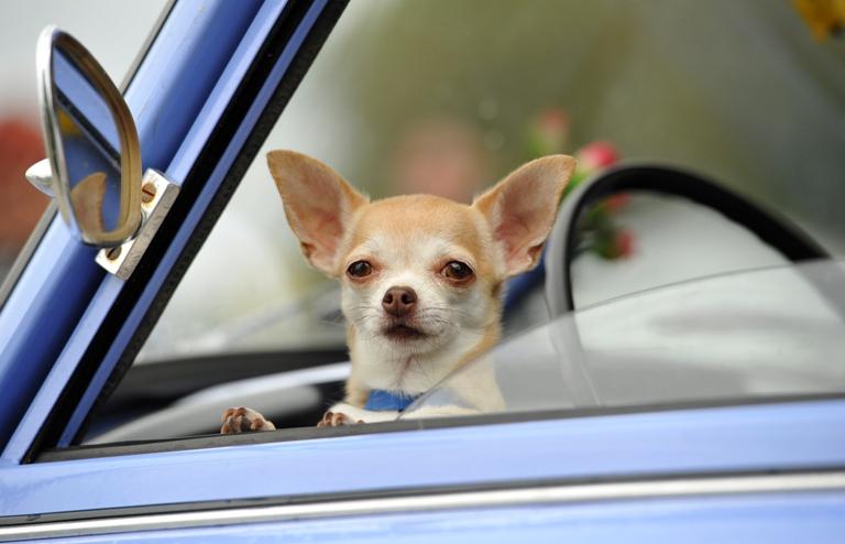 Ученые: собаки понимают человеческую речь-320x180