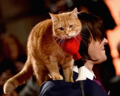 Ученые: кошки любят людей больше, чем еду-430x480