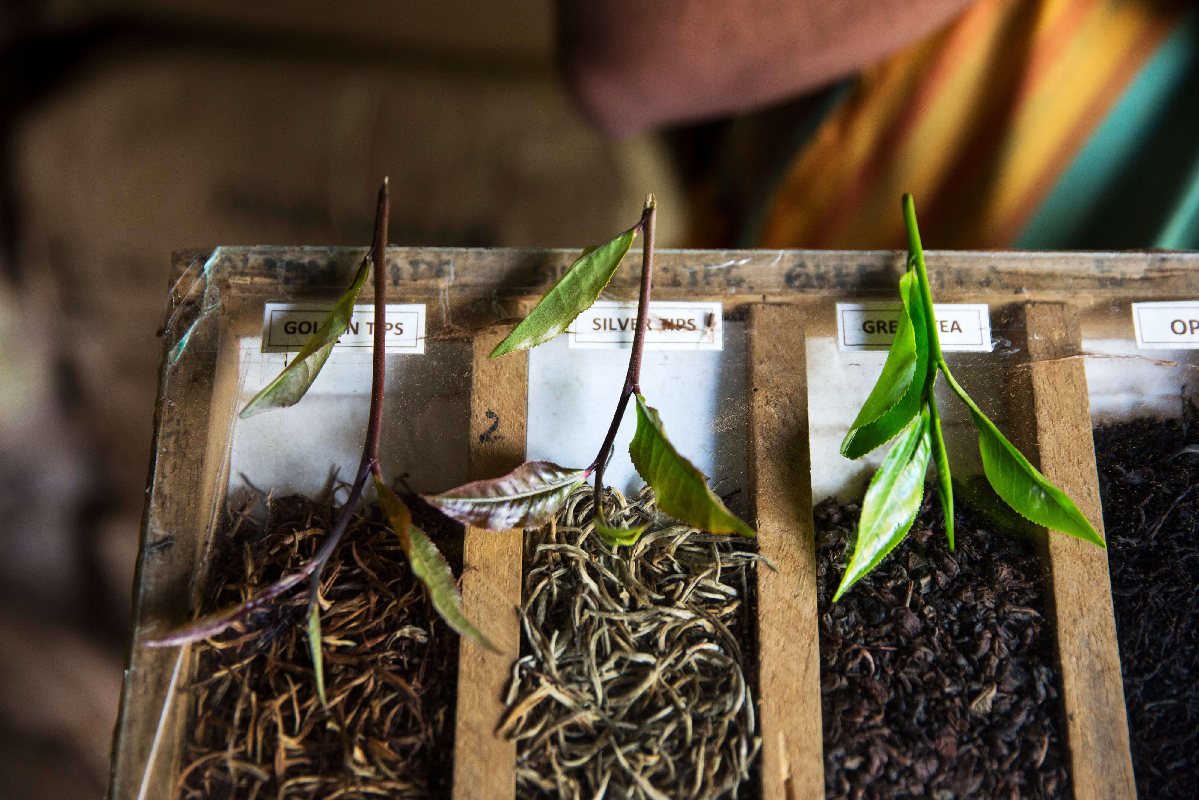 Ароматы с нотками чая для осеннего настроения-Фото 1