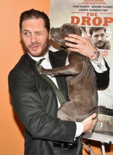 Том Харди с щенками