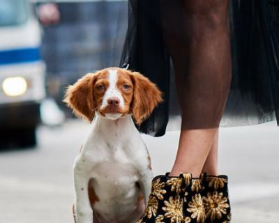 Собаки и обувь: Neiman Marcus представил новую осеннюю коллекцию обуви-430x480