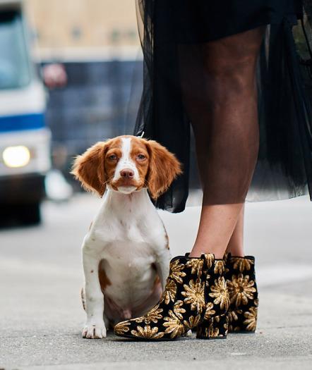 Собаки и обувь: Neiman Marcus представил новую осеннюю коллекцию обуви-320x180