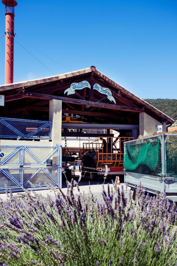 Вести с полей: как выращивают лаванду в Провансе-Фото 5