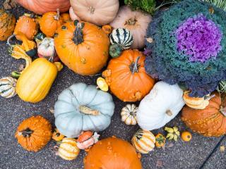 Полезные продукты, которые стоит есть осенью