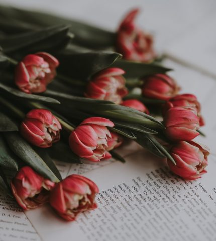Книжные Instagram-аккаунты, на которые стоит подписаться-430x480