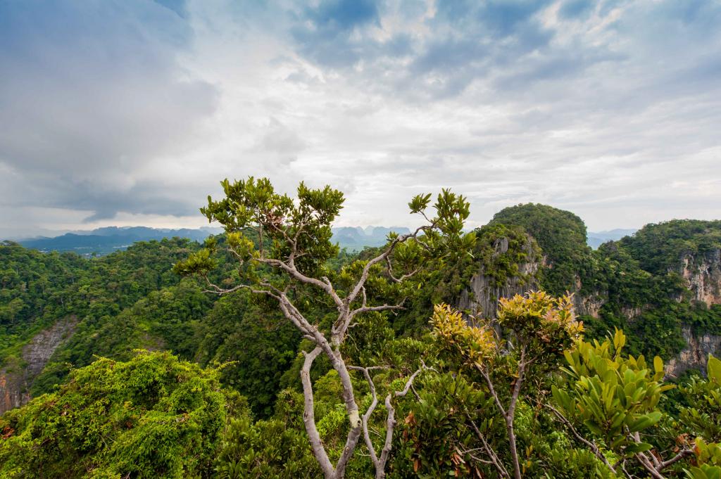 Кухня, отели и достопримечательности Таиланда: все, что нужно знать перед путешествием-Фото 5