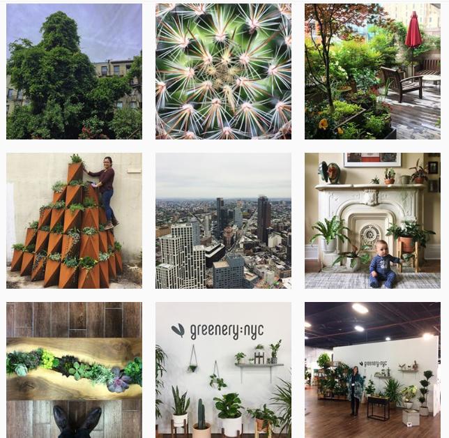 Лучшие «растительные» аккаунты в Instagram-Фото 9