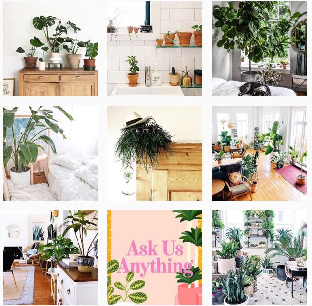 Лучшие «растительные» аккаунты в Instagram-Фото 3