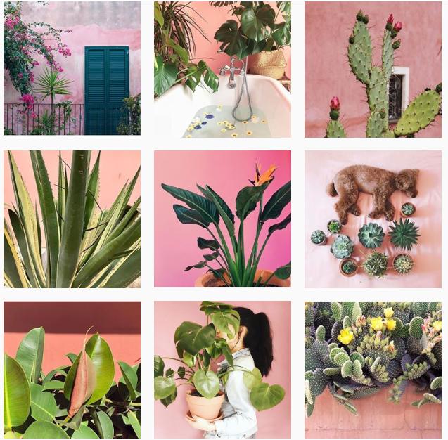 Лучшие «растительные» аккаунты в Instagram-Фото 5
