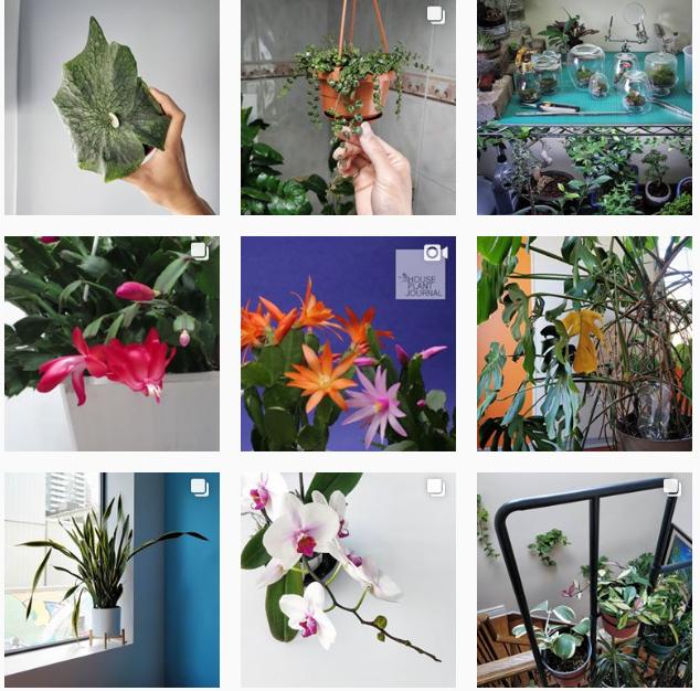 Лучшие «растительные» аккаунты в Instagram-Фото 6
