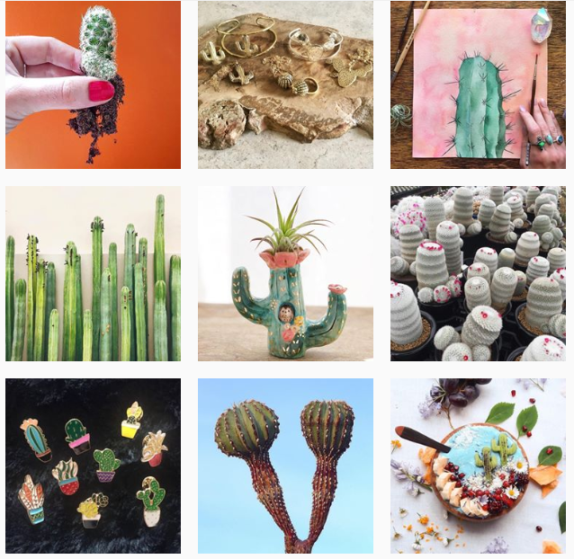 Лучшие «растительные» аккаунты в Instagram-Фото 7