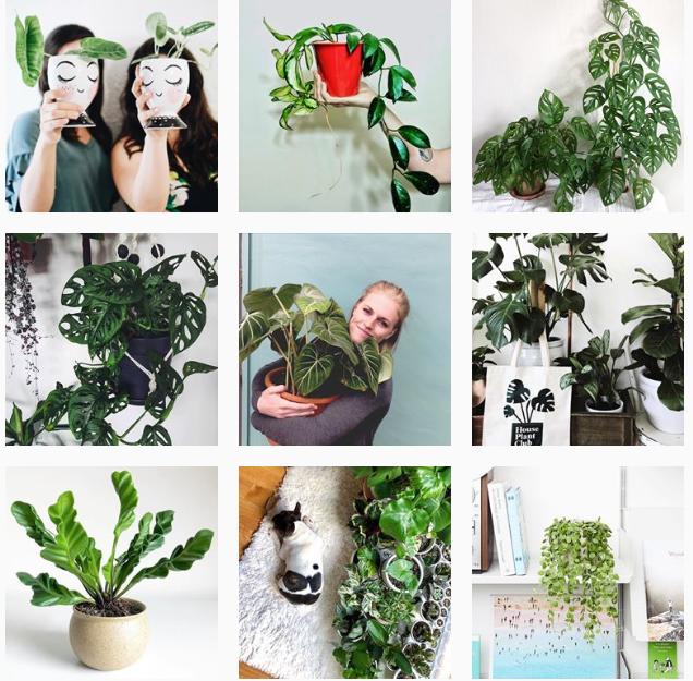 Лучшие «растительные» аккаунты в Instagram-Фото 11
