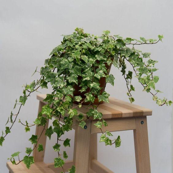 Самые красивые растения для вашего интерьера-Фото 6