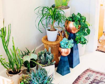 Лучшие «растительные» аккаунты в Instagram-430x480