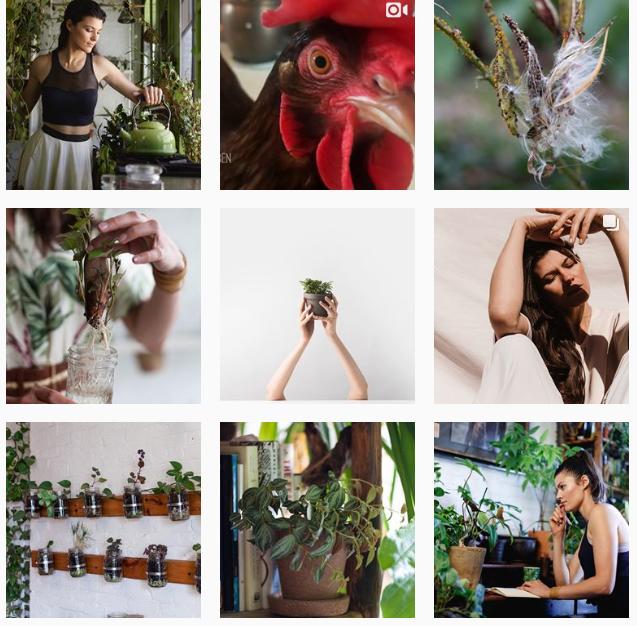 Лучшие «растительные» аккаунты в Instagram-Фото 4