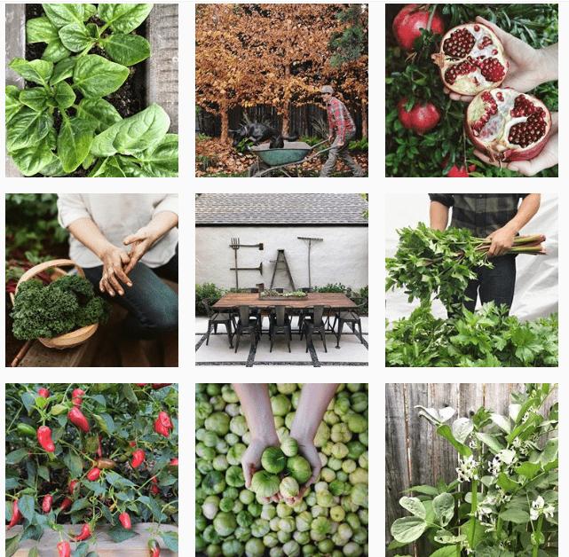 Лучшие «растительные» аккаунты в Instagram-Фото 8