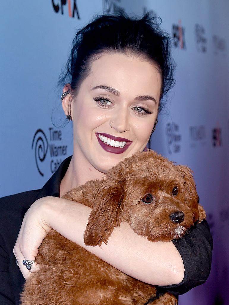 Mini-me: знаменитости и их крошечные собачки (часть 2)
