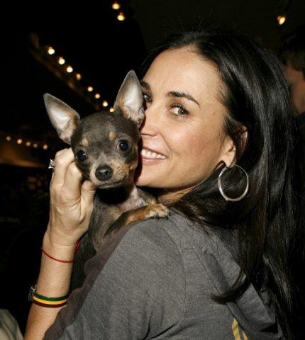 Mini-me: знаменитости и их крошечные собачки (часть 1)-430x480