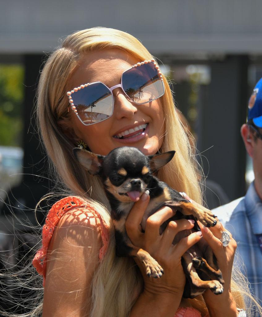 Mini-me: знаменитости и их крошечные собачки (часть 1)-Фото 3