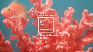 Говорит Pantone: главный цвет 2019 года-320x180
