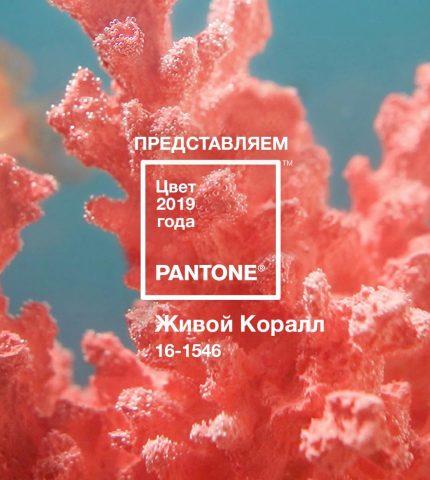 Говорит Pantone: главный цвет 2019 года-430x480