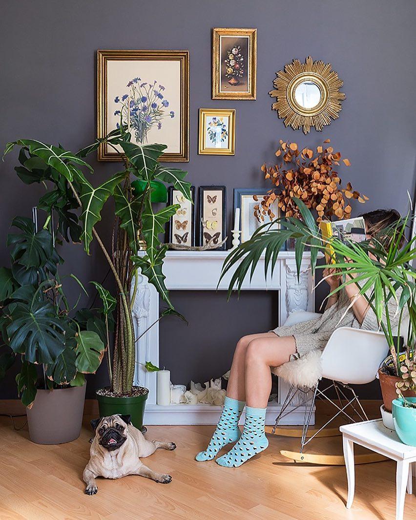Растения, которые стоит поставить в гостиной-Фото 1