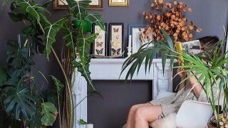 Растения, которые стоит поставить в гостиной-320x180