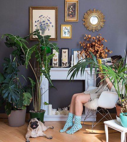 Растения, которые стоит поставить в гостиной-430x480