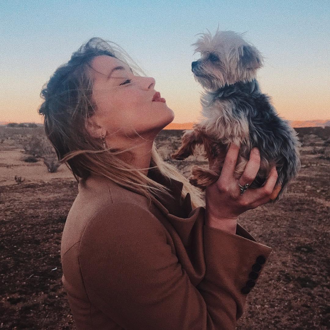 Эмбер Херд отсудила у Джонни Деппа двух собак и лошадь-Фото 2