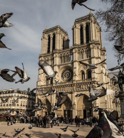 10 фактов о соборе Нотр-Дам-де-Пари-430x480