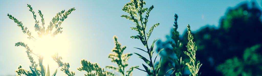 Ингредиенты в косметике, которые повышают чувствительность к солнцу-Фото 2