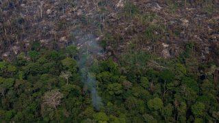 LVMH пожертвует 10 миллионов евро на спасение лесов Амазонки от пожаров