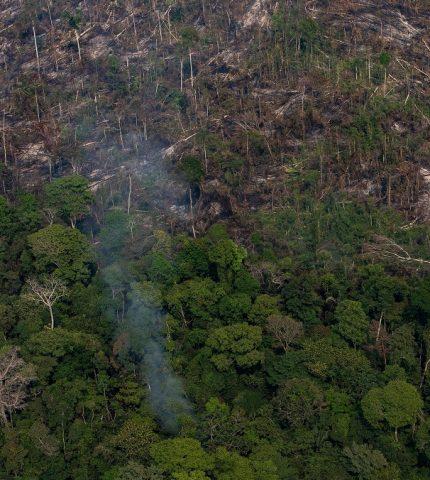 LVMH пожертвует 10 миллионов евро на спасение лесов Амазонки от пожаров-430x480