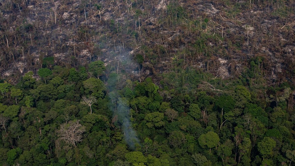 LVMH пожертвует 10 миллионов евро на спасение лесов Амазонки от пожаров-Фото 1