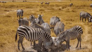 Зачем стоит поехать на отдых в Танзанию и Занзибар-320x180