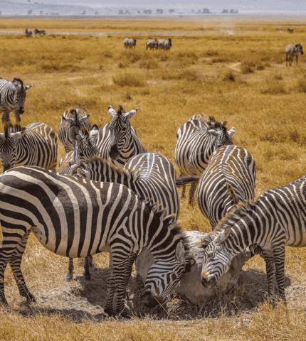 Зачем стоит поехать на отдых в Танзанию и Занзибар-430x480