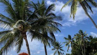 Личный опыт: что делать на Маврикии-320x180