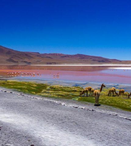 Красная лагуна, соляные террасы и зеркальное озеро: почему в Боливию и Перу хочется возвращаться?-430x480