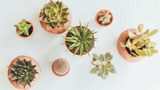 Комнатные растения: 5 главных правил ухода-320x180