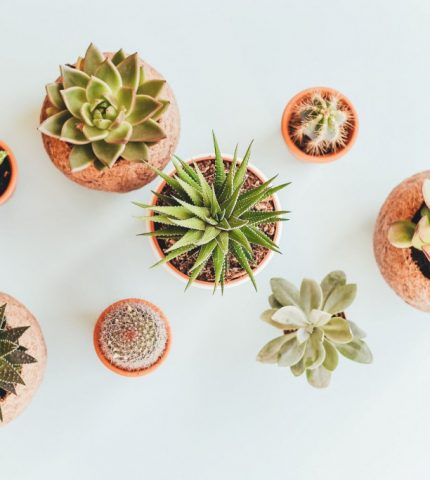 Комнатные растения: 5 главных правил ухода-430x480