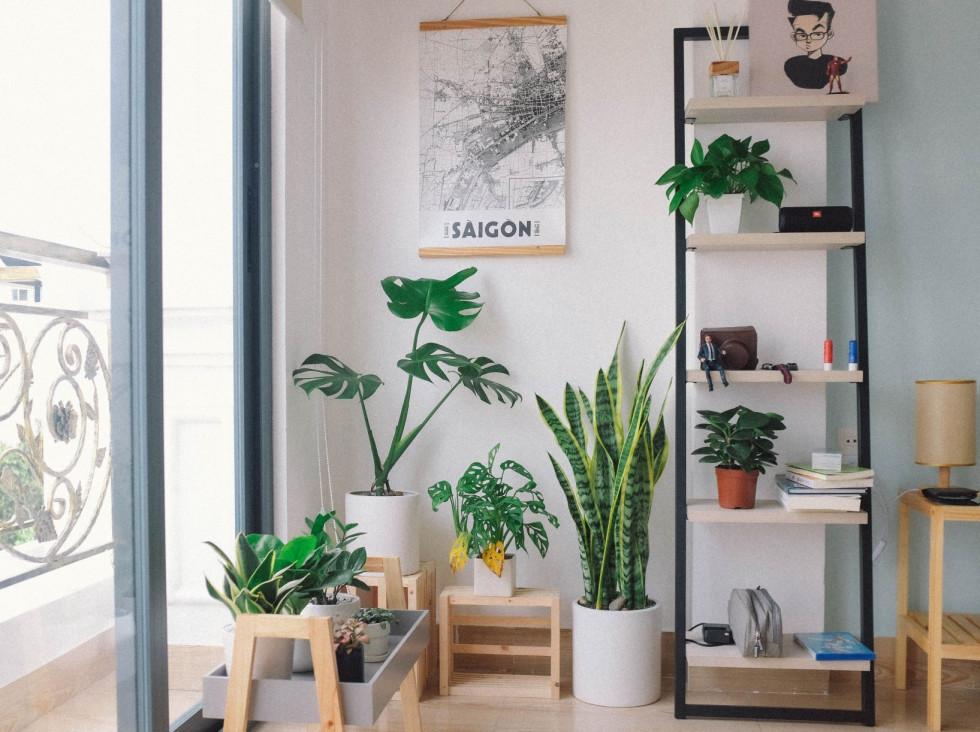 Комнатные растения: 5 главных правил ухода-Фото 2