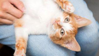 В Нью-Йорке забрали почти всех собак и котов из приютов-320x180